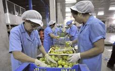 Las Cooperativas Agroalimentarias emplean a un 15% de la población activa de la región