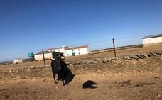 Nuevo caso de violencia animal en una finca de Arroyo de la Luz