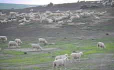 Ya se pueden cobrar los aprovechamientos de medias hierbas y rastrojeras
