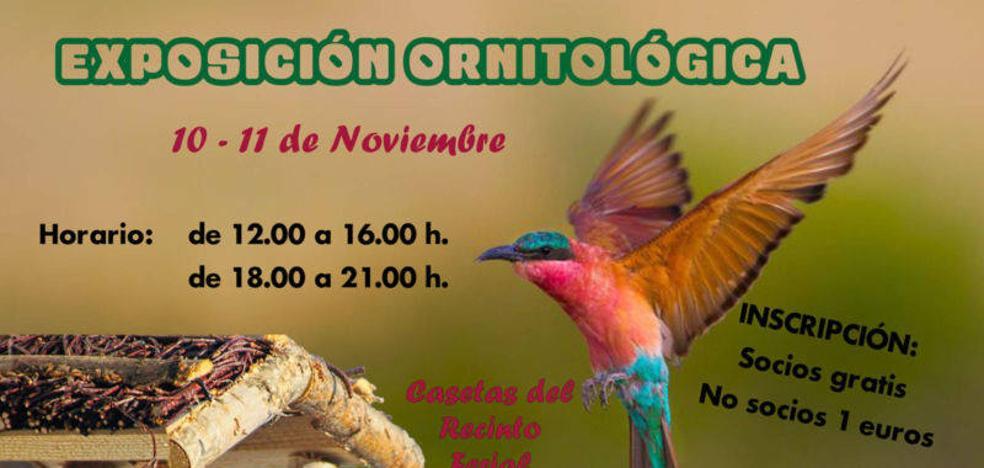 El ferial acogerá de nuevo una exposición ornitológica