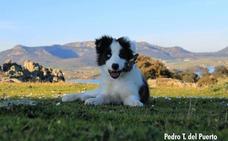 SOS Animales de Campanario pone a la venta su calendario de 2019