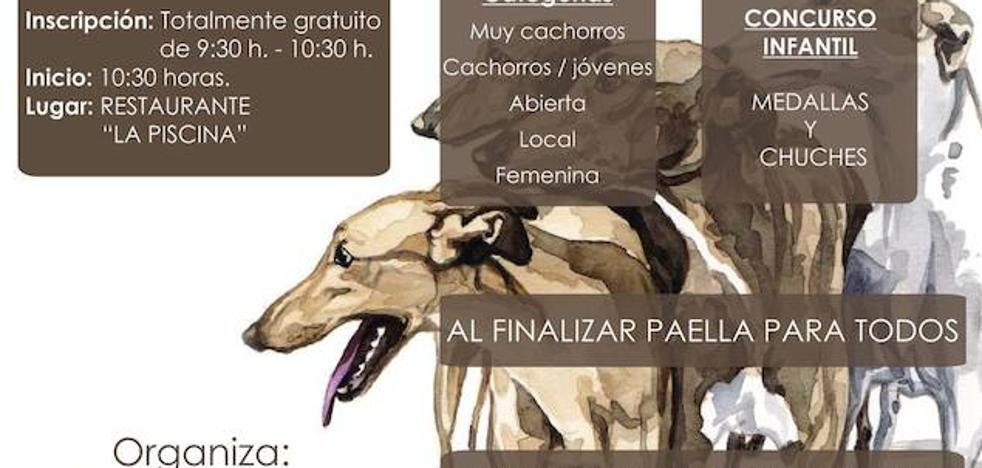 Concurso morfológico de galgo español, el 7 de abril en Quintana