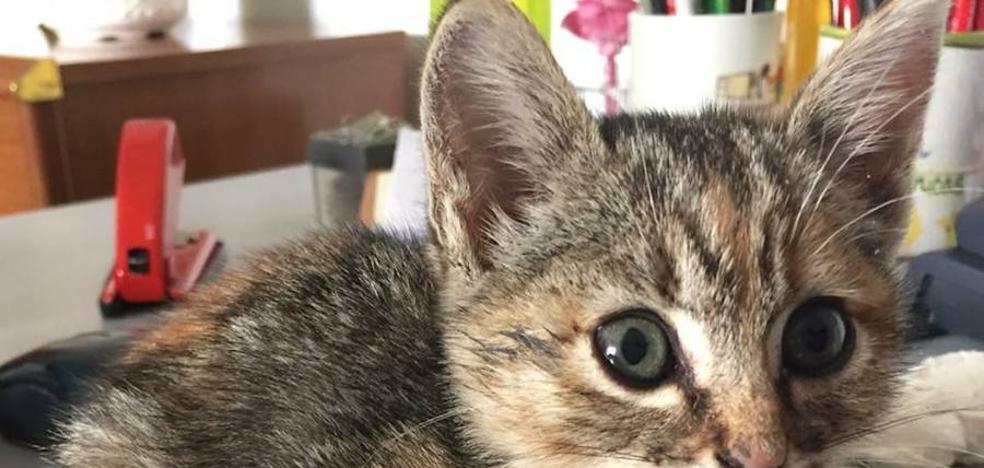 La asociación SOS Animales de Campanario deja de recoger perros y gatos abandonados