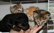 SOS Animales Campanario comunica oficialmente el cese de las recogidas