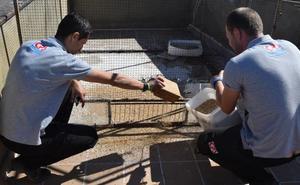 El Ayuntamiento instala jaulas trampa para controlar la plaga de palomas