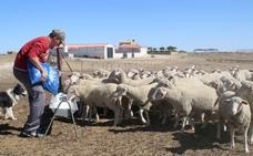 Manuel Cruces trae esperanza y futuro al pastoreo en La Serena