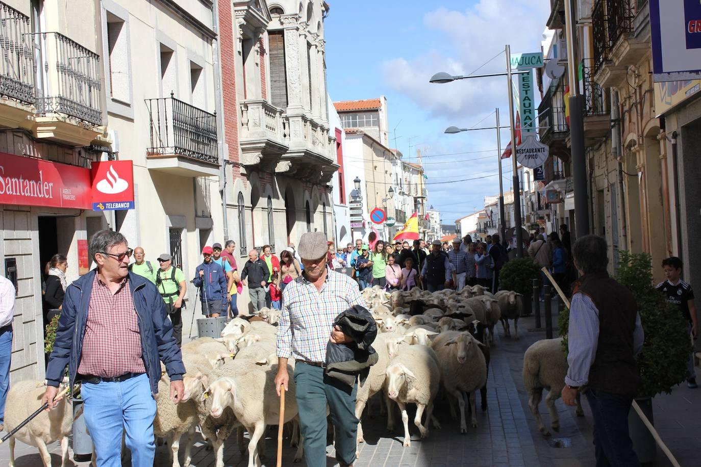 Todo listo para albergar la IV Feria Europea del Queso de Casar de Cáceres