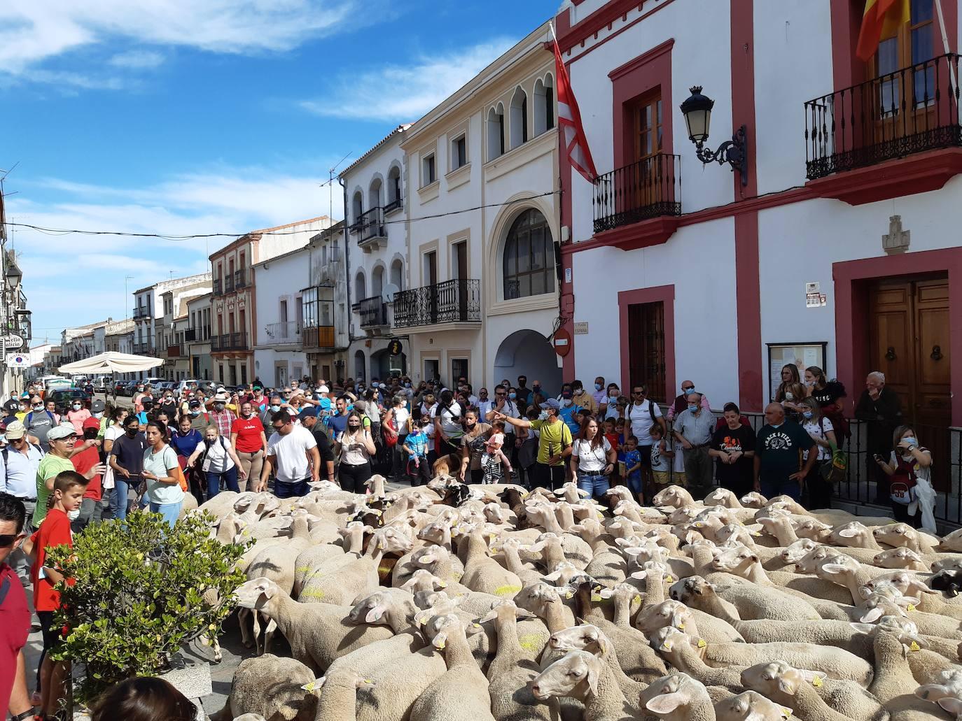 Unas 1.500 personas y 200 ovejas, protagonistas hoy de la XV Ruta trashumante