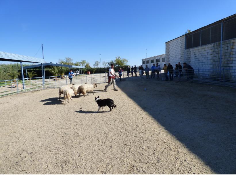 La Escuela de Pastores finaliza otro curso de adiestramiento de perro de pastor