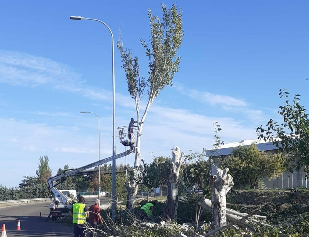El ayuntamiento acomete un plan para prevenir la caída de arboles