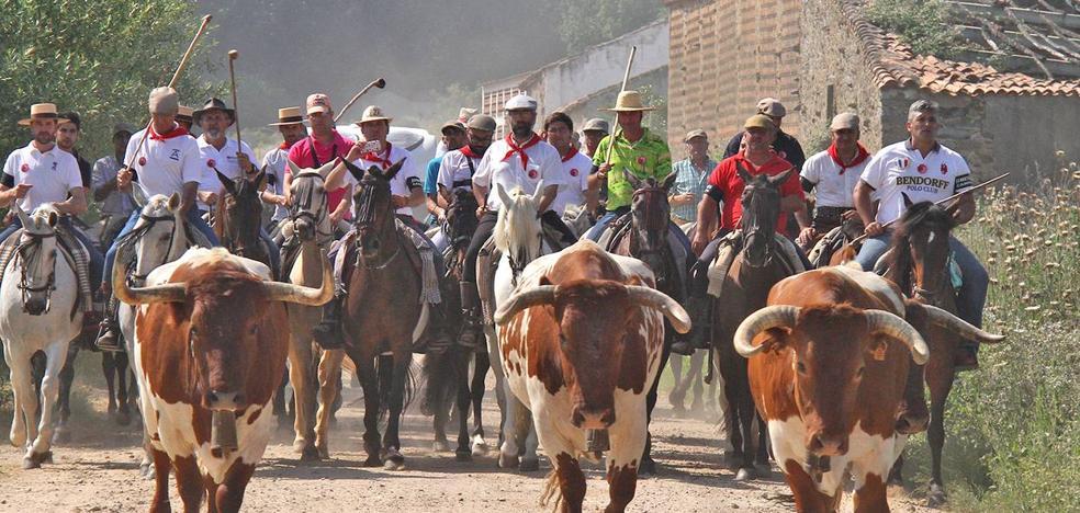 Abierto el plazo para inscribirse en el traslado de bueyes a caballo en las Fiestas de San Juan