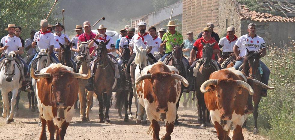 Comienza la semana grande de Coria con sus tradicionales encierros de San Juan