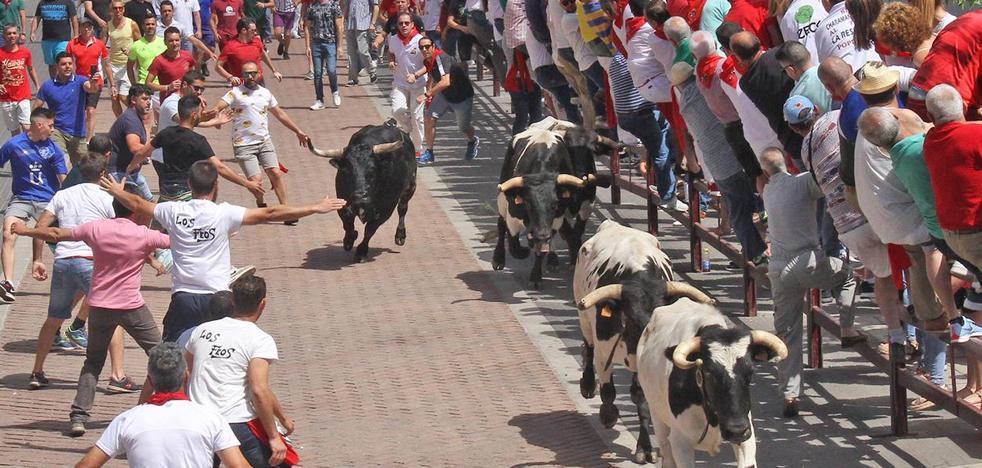 Mejicano de la ganadería Peñajara, primer toro de la Junta de Defensa