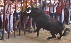 El toro Judío de La Geta se cobró varios heridos, uno de ellos de extrema gravedad