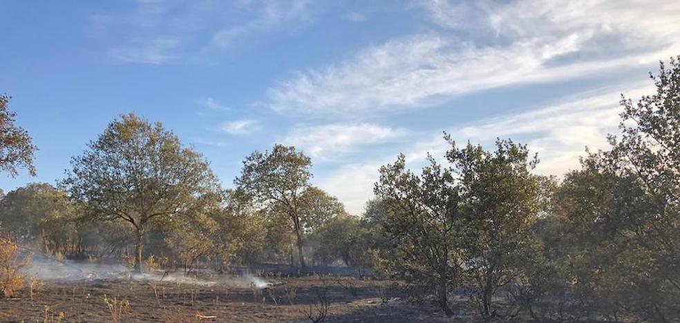Cerca de 4 hectáreas de monte bajo se quema tras el incendio en la dehesa Francisco Herrera