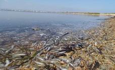 Guareña recoge 1.400 firmas para salvar el Mar Menor