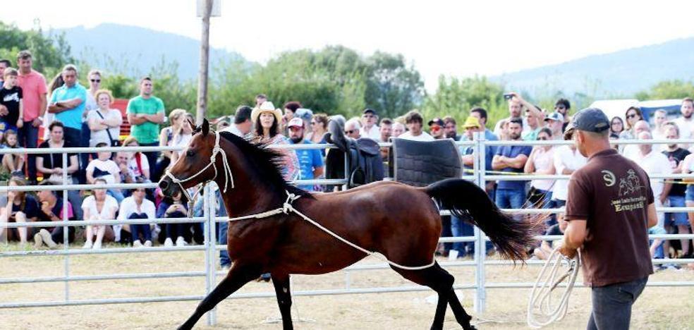 José Luis Serradilla gana un concurso de doma natural de caballos