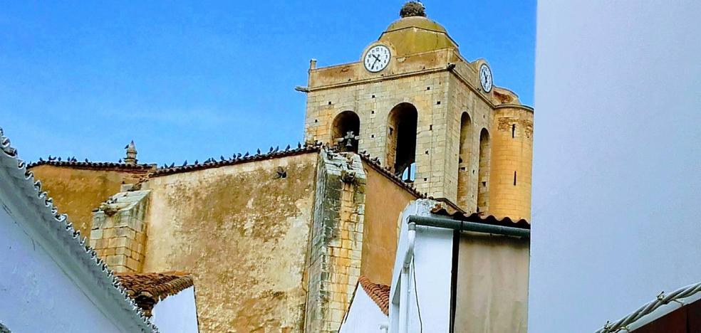 Las palomas de la torre de la Iglesia se han convertido en plaga y lo ensucian todo