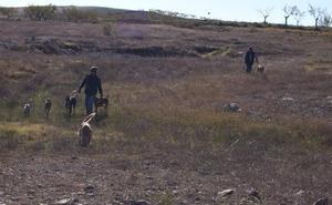 Roban seis galgos a plena luz del día en dos perreras de Los Santos