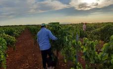 Concluye la vendimia:«Este año los vinos serán muy buenos»- asegura el enólogo Ventura Arroyo