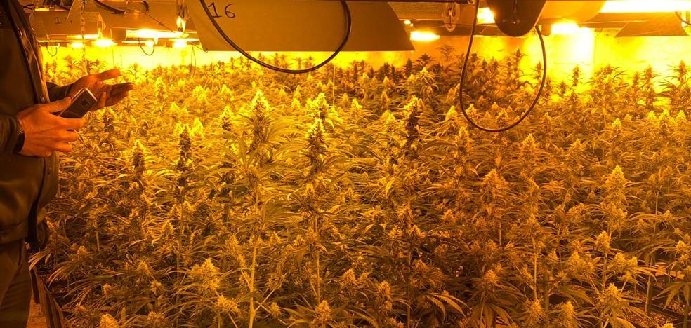 Los detenidos en la operación antidroga, un clan familiar, cultivaban marihuana en tres viviendas de Casar de Miajadas