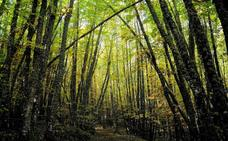 'Vamos a aprender de la naturaleza', ADICOMT propone paseos didácticos por la naturaleza de la comarca