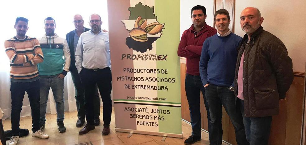 La asociación regional de productores de pistachos reúne ya cerca de 600 hectáreas