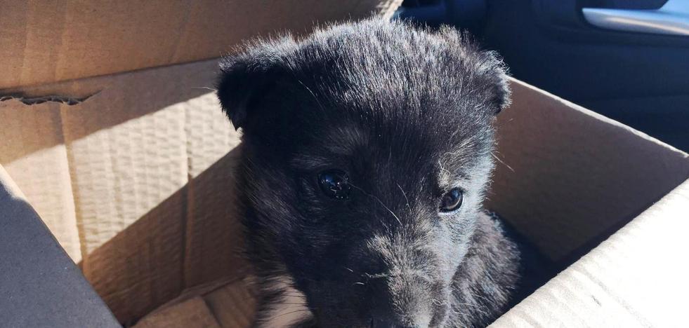 Nuevo llamamiento a la ciudadanía para terminar con el abandono de animales
