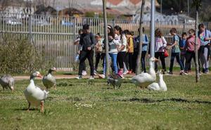 Los voluntarios de La Caixa en Badajoz celebran un paseo por el Guadiana
