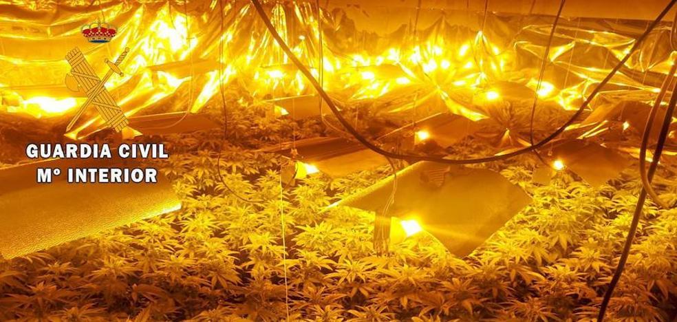 La Guardia Civil detiene a un vecino de Navalmoral que cultivaba marihuana en el interior de su vivienda