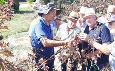 De viñas tradicionales a ecológicas en Madrigal de la Vera