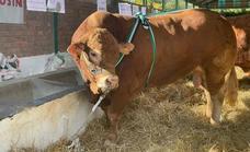 La ganadería Hermanos Ruano López gana el primer premio de la Feria Ganadera de Zafra
