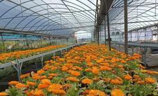 Antes del día de Todos los Santos, los ayuntamientos de la provincia habrán podido plantar las flores repartidas por el vivero de la Diputación