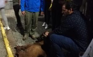 Olivenza con la Feria el Toro y Valverde con la de la Cabra