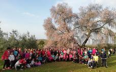 Unas 150 personas participan en la ruta al Almendro Real