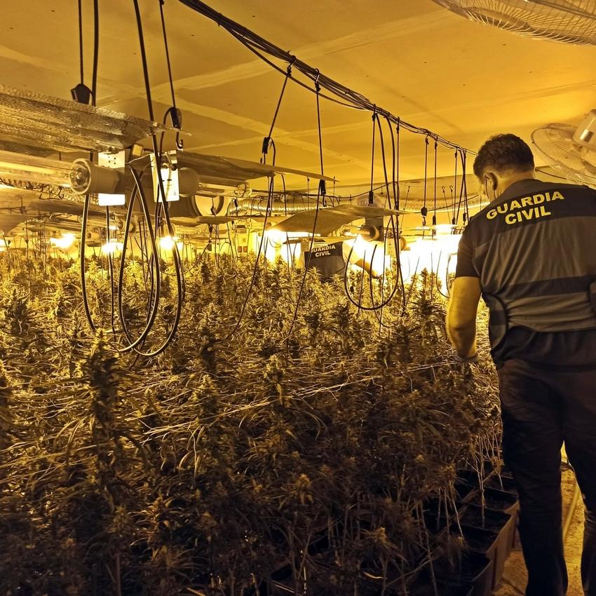 La Guardia Civil de Villanueva desmantela una plantación de marihuana en Orellana de la Sierra