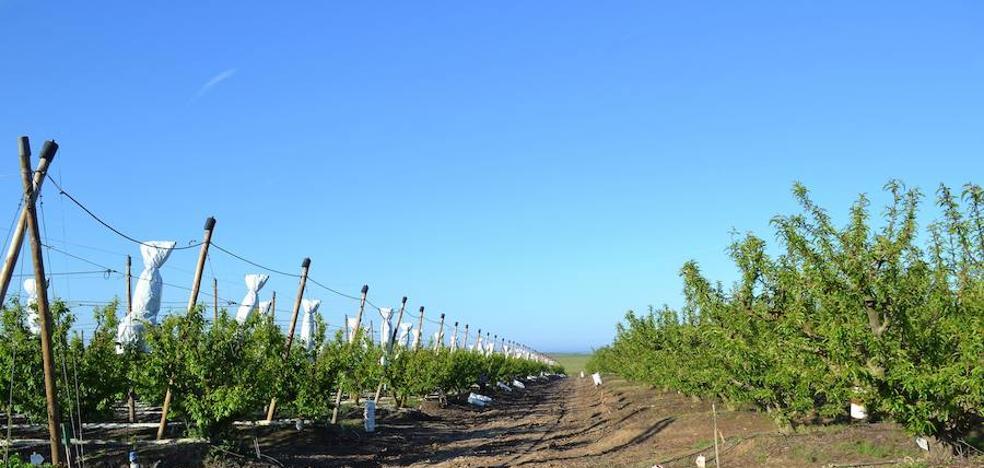 Desarrollo Rural adjudica las obras del regadío por valor de 1.809.978 euros