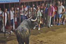 'Limusino', el toro de los sajuanes de Coria que causó tres heridos