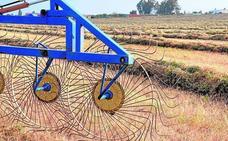 Asaja calcula que la región producirá 0,3 millones de toneladas de cereal