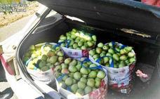 Sorprenden a tres personas con 100 kilos de peras robadas en Badajoz