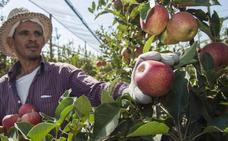 La Junta impulsa un Certificado de Profesionalidad de Fruticultura nivel 2