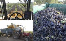 La exportación supone ya casi la mitad de las ventas del vino extremeño