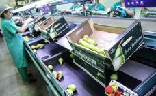 Frutas Fernández redobla su apuesta por la ciruela extremeña