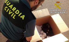 La Guardia Civil investiga el abandono de once cachorros en Valdefuentes