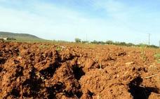 La Unión asegura que si la Junta no agiliza las ayudas por la sequía llegarán en 2018