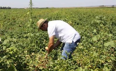 El PP exige incrementar las ayudas a los agricultores de Villanueva