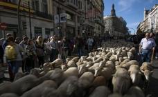 Las ovejas vuelven al centro de Madrid