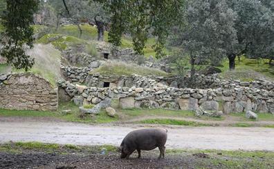 'Las corralás' de Torrequemada, declaradas Bien de Interés Cultural