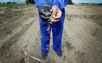 COAG denuncia que solo se ha sembrado el 25% de la superficie de cereal