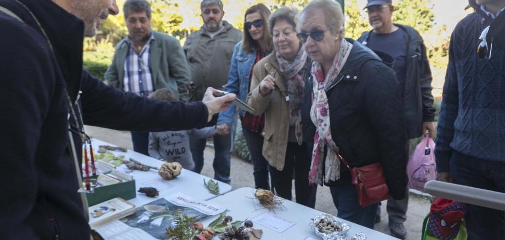Día de pintura y setas en Cáceres